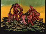 コマクサBleeding Heart Flowers