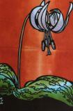 カタクリDogtooth violets